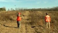 Join Sam, Ann Taylor, Keith Ward and Anthony Puglia as that hunt Pheasant, Quail and Chukar at the Covey Rise Lodge and Farm in Husser, LA.