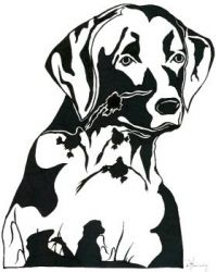 Ace's Gun Dogs - dog training, puppies, retriever,retriever train in MS