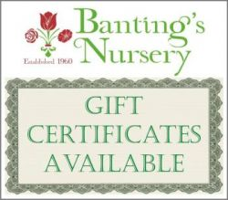 Banting's Nursery - plants, nursery, landscape, pottery, seeds, lawn in Louisiana
