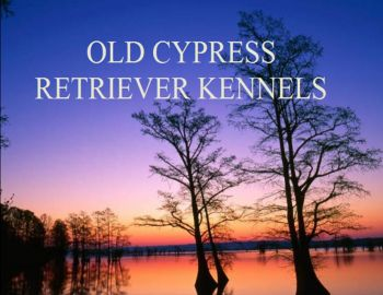 Old Cypress Kennels - Full service retriever training kennel, specializing in Labrador Retrievers.