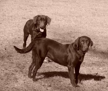 Sandstone Kennels - Locally owned and very reputable dog kennels; providing many different types of hunting breeds.