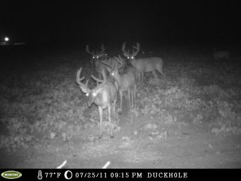 Lynches River Outfitters  - Here at Lynches River Outfitters near Lake City and Scranton, SC - We have intensively managed our agricultural fields, food plots, swamp bottoms, & established pine thickets for over 23 years. With 1,000+ acres & 3.5 miles of turkey roosting & deer breed