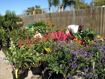 Martin's Nursery & Landscape Company - Spring is here and we are ready to offer St. Charles Parish complete landscape design installation & maintenance! Our full service garden center has a licensed Landscape Horticulturalist and knowledgeable staff to serve you.