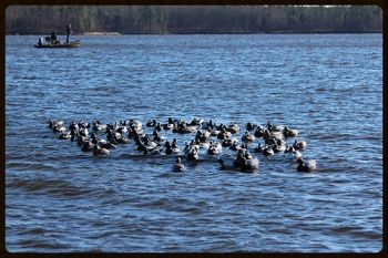 Southern Flyway Outfitters  - The Decoy Raft TM Waterfowl Platform is a truly unique and revolutionary product unlike anything that exists in the waterfowl market today.  The Decoy Raft provides a platform that allows the hunter to deploy and retrieve multiple dozens (100+) of decoys
