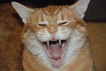 jodiemiller Beard: Scary Kitty