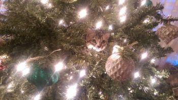 JenniferRichardson Beard: I don\'t remember hanging that ornament