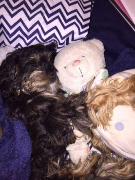 Kristen Danna Beard: Bear Hugs (& Puppy Love)