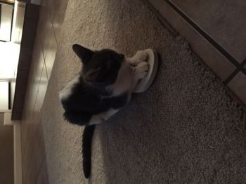 Angelle Smith  Beard: Who said cats couldn\'t wear flip flops