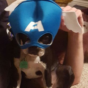 HelenaCade Beard: Who says only Humans Can Be Superheros