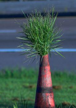 QuentinAucoin Beard: Caution - Grass at Work