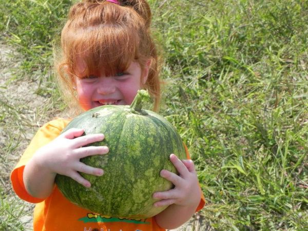 Pickin' Creole Pumpkins-LaineyVicknair