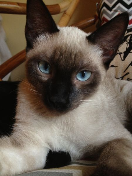 Oh blue eyes would be jealous -BrandieFabre
