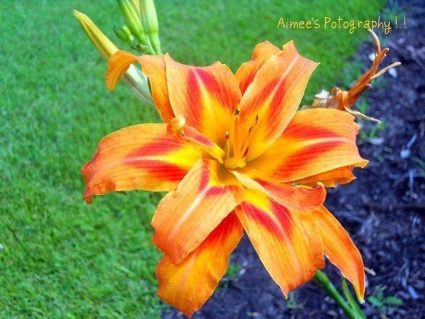 Beautiful Orange Flower-Laurence Arant