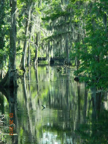 Louisiana Bald Cypress garden - Terri Box