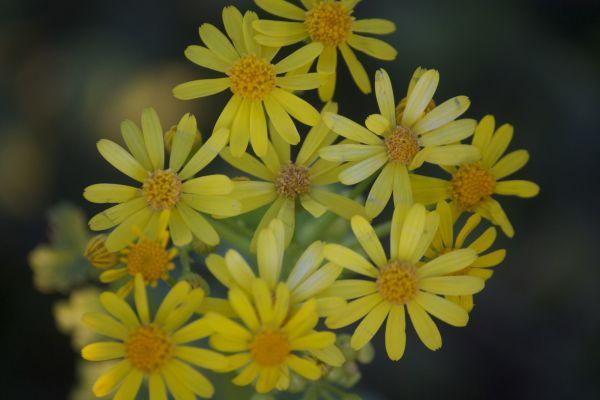 Tiny beauties -Peg Bordelon