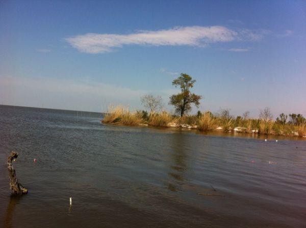 swamp watching-KristyNewman