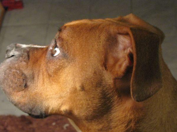 my dog-StevenLazaro