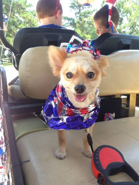labor day sprit dog
