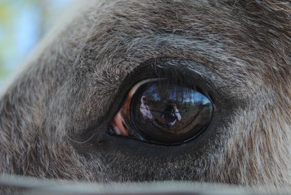 In the eye-JamieFindley