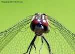 Mike Peters Beard: Alien Dragon Fly
