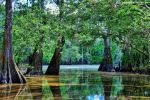 Mike Peters Beard: Louisiana Swamp Scene