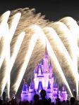 Mike Peters Beard: Magic Kingdom Fireworks