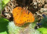 heidioubre Beard: Beautiful Butterfly!!