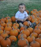 CaritasPalmisano Beard: Little Pumpkin
