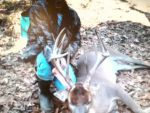 Braden Thomassee 11 point, first buck LARGE BROW TINES