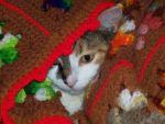 Kellie Tonglet Beard: Snuggle kitty