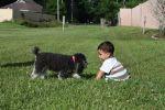 CarolPlack Beard: Puppy Love