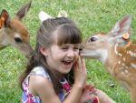 CarrieFolse Beard: Deer Kisses