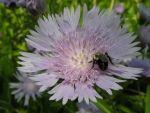 Joyann Maddox Beard: Let Me Bee