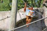 AnthonyD'Amico Beard: Monkeying Around...