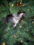 jolenedufrene Beard: Christmas Kitty