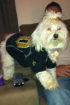 Audrey Higgins Beard: Saints Pup