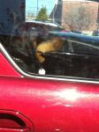 CarolynRappold Beard: Dog as passenger