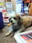 Carolyn Rappold Beard: After Dinner Cigar Bone with on looker in back ground