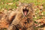 ClaraNicholas Beard: Sleepy Cat