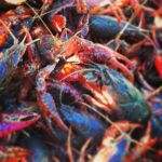 Logan  Long  Beard: Crawfish Season On the Way