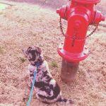 EmaleeSwisshelm Beard: Firedog