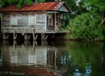 Trent Pearsall Beard: Old Cabin on Bayou Gauche