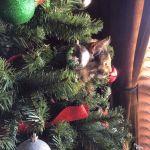 DeniseRocco Beard: Guardian of the Tree