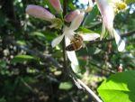 GaryDeroche Beard: I bees busy