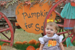 Tori  Jensen Beard: Pumpkins for Sale