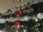 Jennifer  Bourg Beard: True meaning of Copycat Christmas