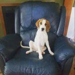 carlaboudreaux Beard: PawPaw's Chair?