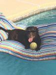 KatieFunck Beard: Cokie chillin by the pool!