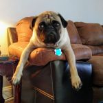 Just Chill\'n, Photo submitted by joymaddox