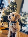 Hailee Weber Beard: My Christmas Angel